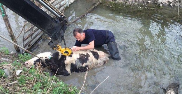 Dereye düşen ineği itfaiye kurtardı