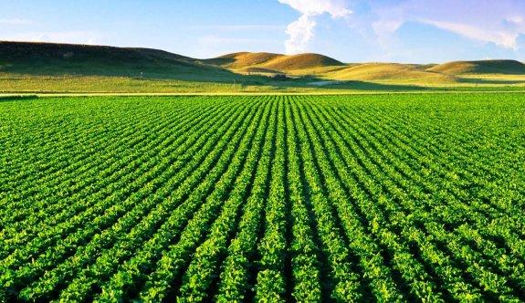 Küresel tarım savaşında akıl almaz toprak gaspı!