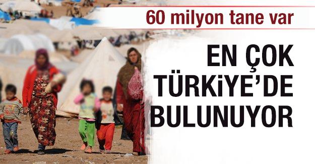 60 milyon tane var! En çok Türkiye'de bulunuyor