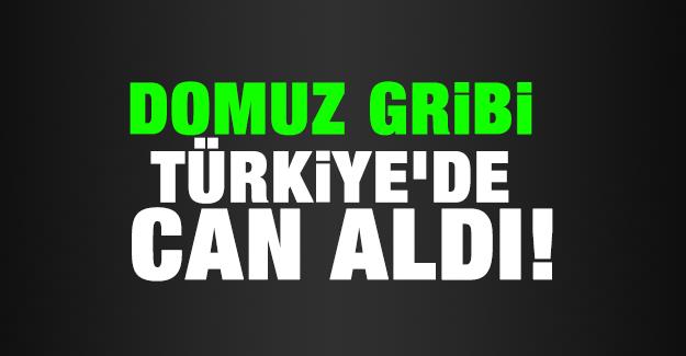 Domuz gribi Türkiye'de can aldı!