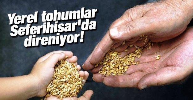 Yerel tohumlar Seferihisar'da direniyor!